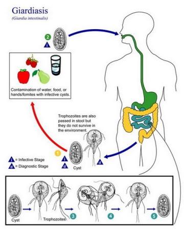 питье от паразитов